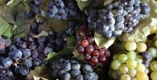 Uva Borgoña el blog de modesta
